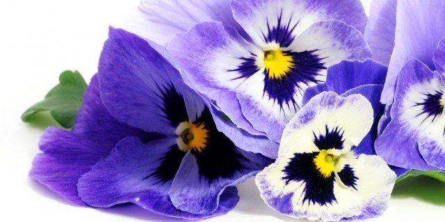 Vasi fioriti sul terrazzo fino ad aprile