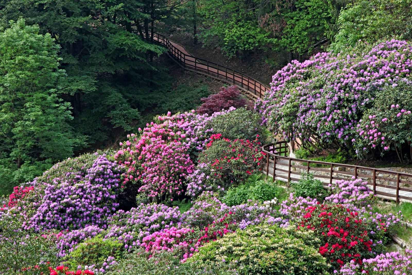 In edicola dal 23 marzo casa in fiore di aprile cose di casa - Giardini particolari ...