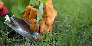 Erbacce: estirpare a mano o con i prodotti giusti le erbe infestanti
