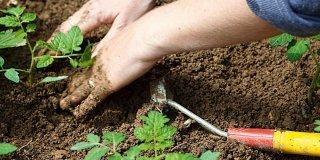 mani lavorano terra orto