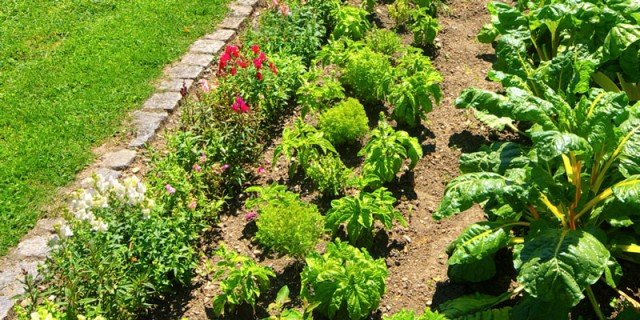 Proteggere l'orto dall'aria e dal terreno inquinati