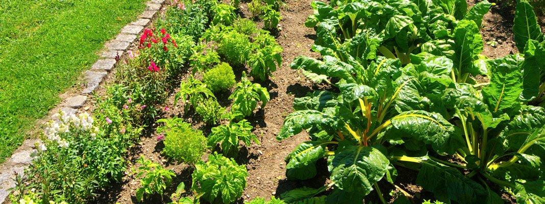 Proteggere l orto dall aria e dal terreno inquinati cose - L orto in giardino ...