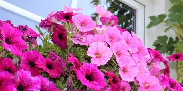 Il vaso giusto per ogni pianta