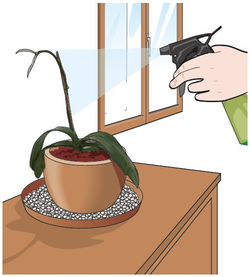Portare all 39 aperto le orchidee cose di casa for Piani di casa con spazio di vita all aperto