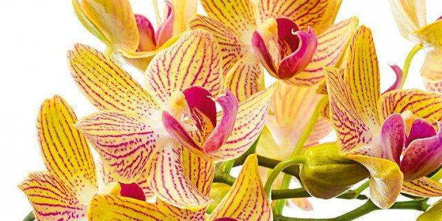 Portare all'aperto le orchidee