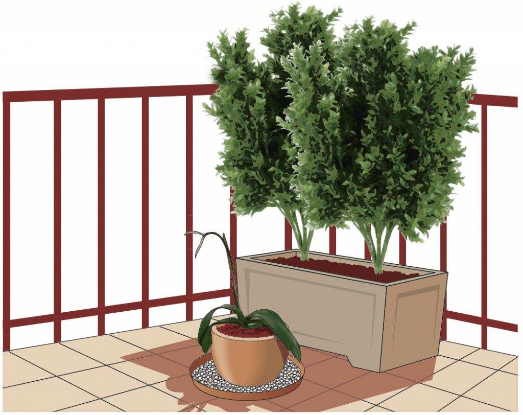 Portare all 39 aperto le orchidee cose di casa for Planimetrie dell interno della casa all aperto