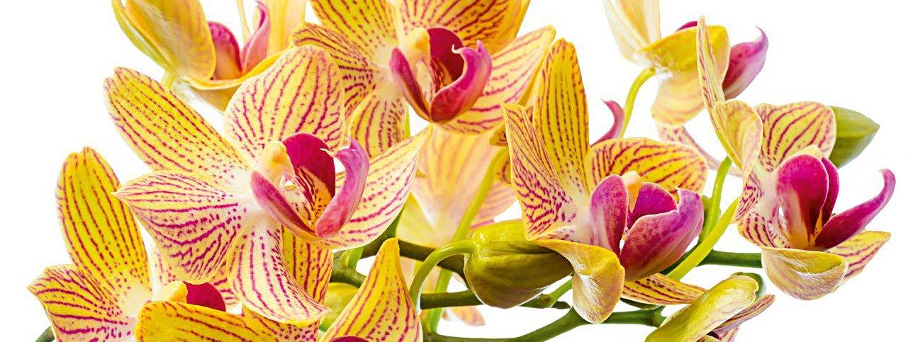 Portare all 39 aperto le orchidee cose di casa for Piani di casa all aperto