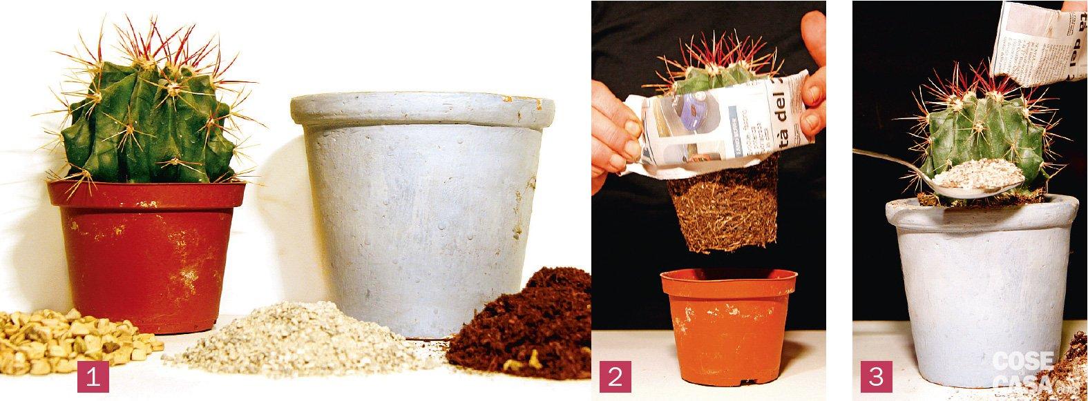 Rinvasare le piante grasse cose di casa - Piante grasse in casa ...