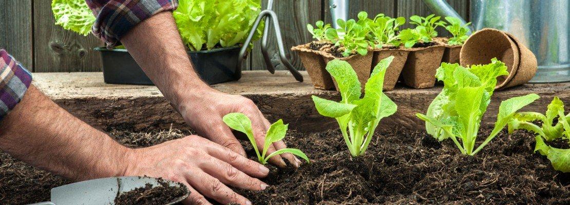 Nell orto adesso si trapianta cose di casa for Vendita piante orto