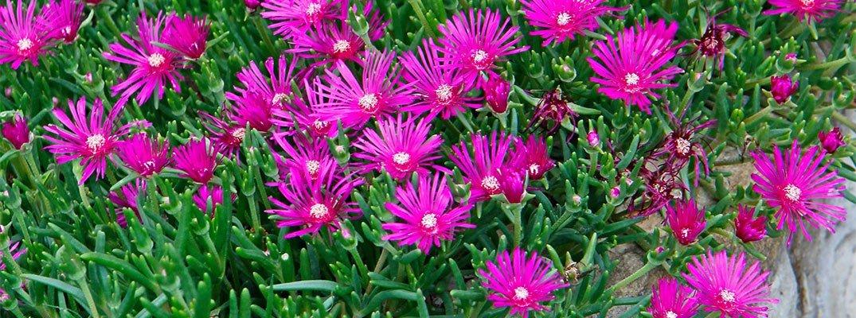Fiori d estate per il giardino cose di casa - Il giardino d estate ...