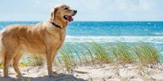 In vacanza con il cane