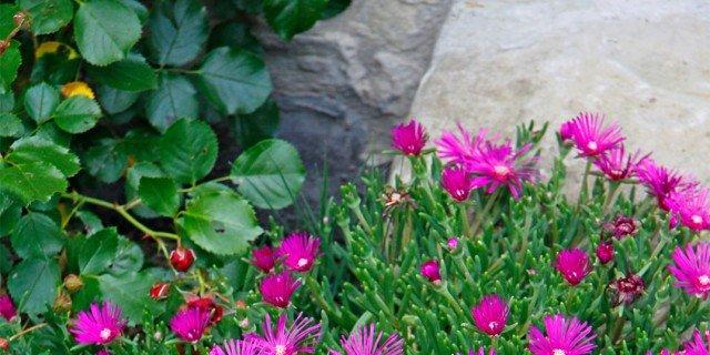 Fiori d'estate per il giardino