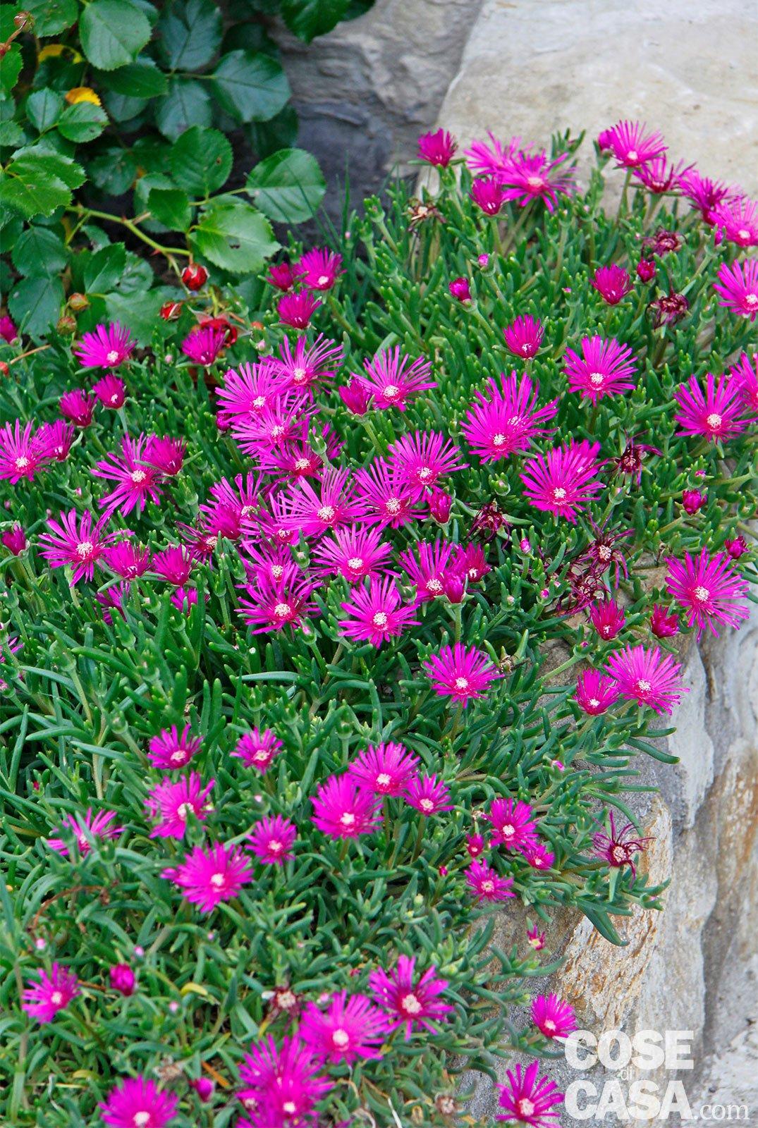 Fiori X Aiuole.Fiori D Estate Per Il Giardino Specie Da Coltivare Cose Di Casa