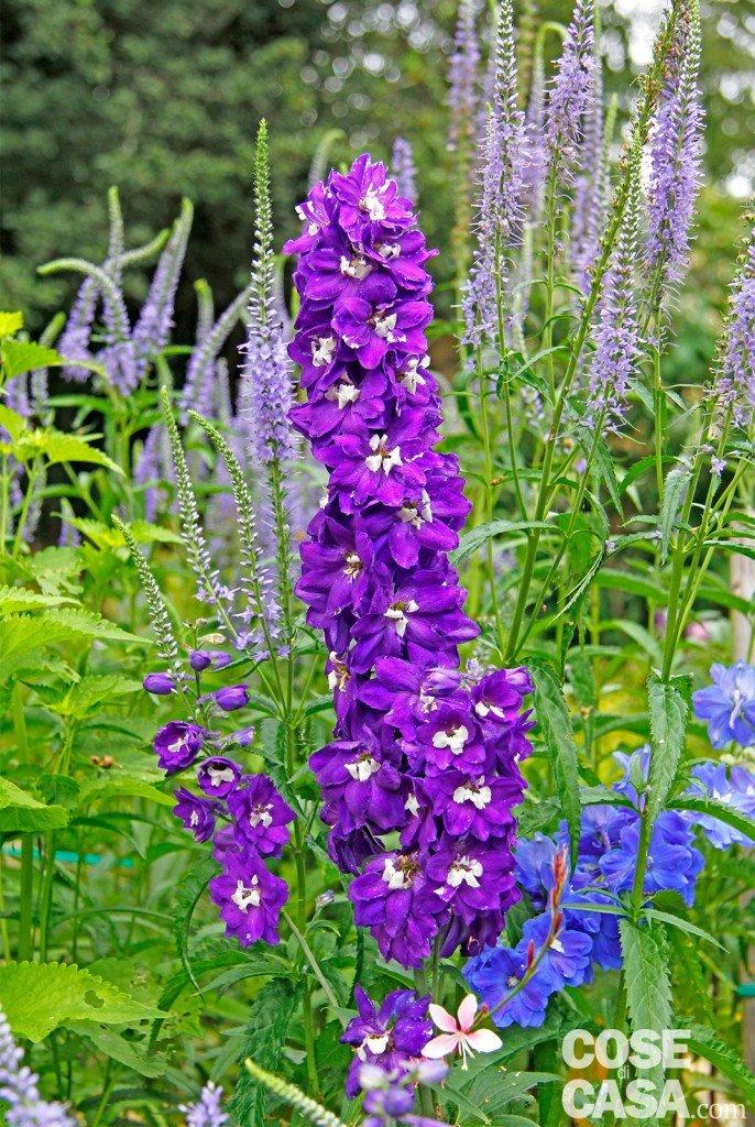 Fiori d estate per il giardino cose di casa for Fiori piante perenni
