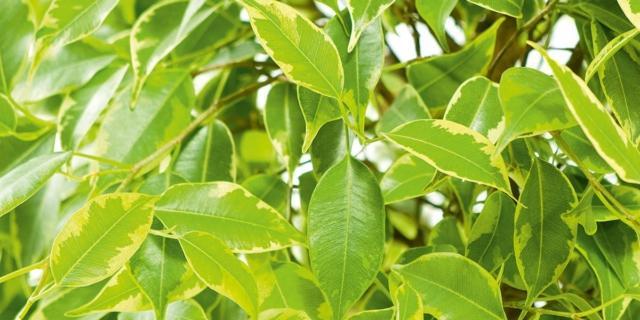 Moltiplicare le piante di casa