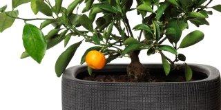 frutta-in-vaso