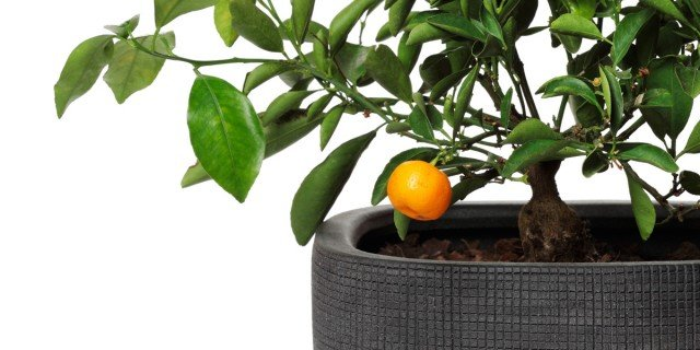 Frutta in vaso? Si può