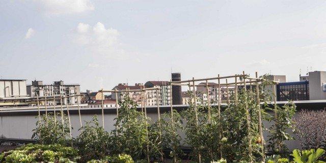 """Orto sul tetto: a Milano il progetto """"Coltivare la città"""""""