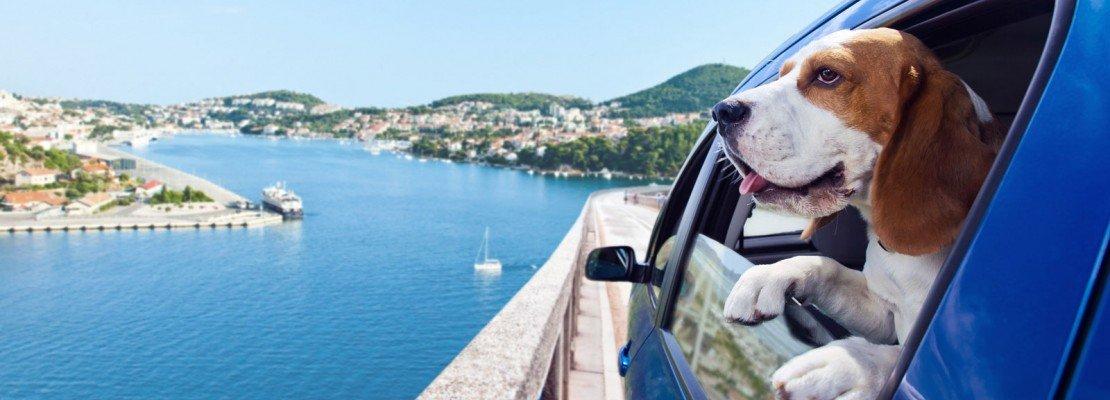 Vacanze serene con il cane o il gatto