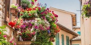 balcone con fiori vasi gerani