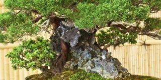 Bonsai: annaffiare bene d'estate