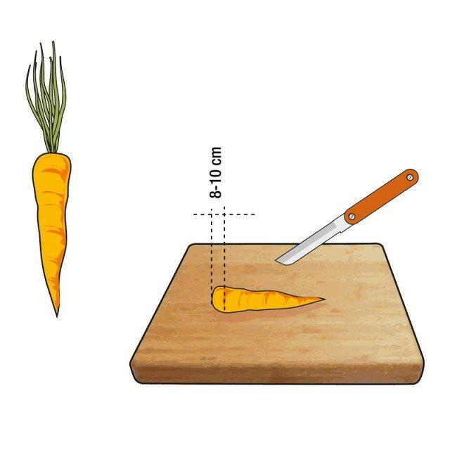 1. Al momento della pulizia, tolte le foglie, si deve tagliare con cura, e un coltello affilato, la parte di carota alla base del fogliame, e farne una rondella spessa 8 o 10 mm.