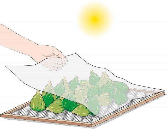 Durante la notte trasferirli al coperto per evitare l'umidità e, al mattino, rimettere i frutti al sole coperti con la garza. I fichi saranno completamente essiccati quando la buccia assumerà un aspetto rugoso e non uscirà succo se si schiacciano.