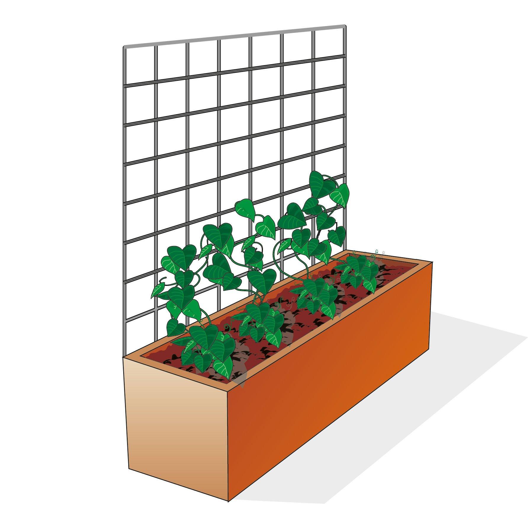 Alberi da giardino crescita veloce for Alberi a crescita veloce