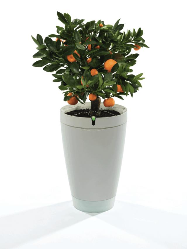 Parrot-Pot_White-Plant