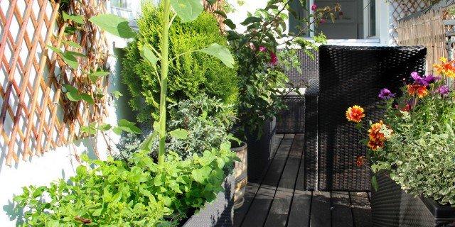 Proteggere dal freddo le piante sul balcone