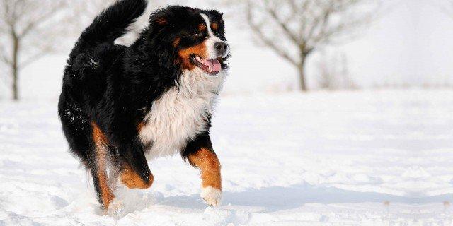 Cane e gatto: proteggerli dal freddo