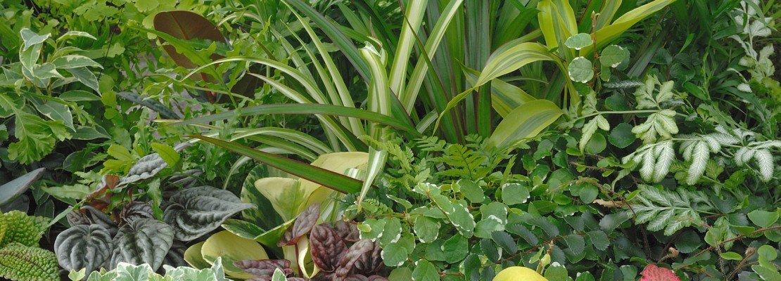 piante da interno in condominio