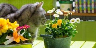 Piante velenose per cane e gatto