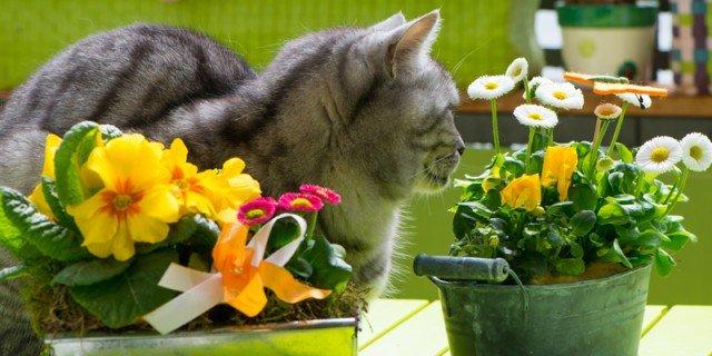 piante velenose animali