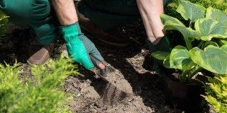 preparare terreno messa dimora piante