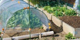 tunnel di coltivazione