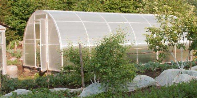 coltivare ortaggi nel tunnel