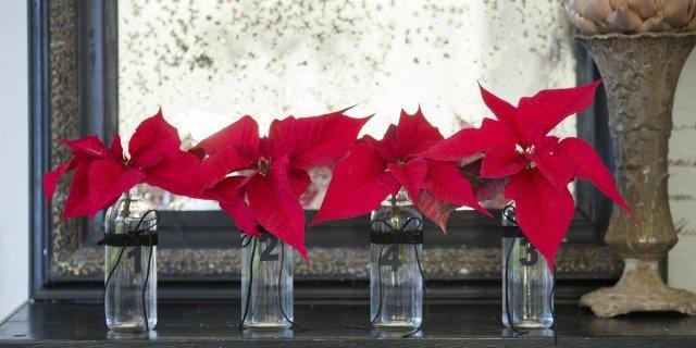 Stella Di Natale In Casa.Stella Di Natale Come Decorare Casa Per Le Feste Cose Di Casa