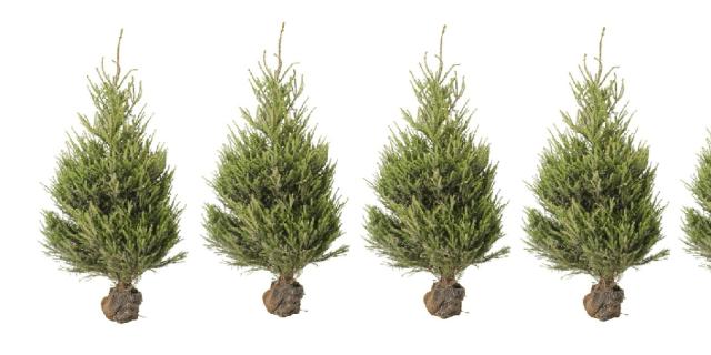Albero Di Natale Ikea 2018.Ikea Presenta Compostiamoci Bene L Albero Di Natale Che Fa Bene