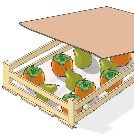 2. Se i frutti raccolti dovessero ancora maturare, la tecnica più indicata da utilizzare è quella dell'ammezzimento, un sistema di maturazione idoneo per altri frutti acerbi come le mele, le nespole, le banane, le pere e i kiwi. I frutti devono essere disposti in una cassetta in luogo temperato e fresco, distanziati gli uni dagli altri e non sovrapposti; negli spazi vuoti vanno inserite delle mele o delle pere, quindi il contenitore va coperto con un foglio di cartone o un canovaccio da cucina.