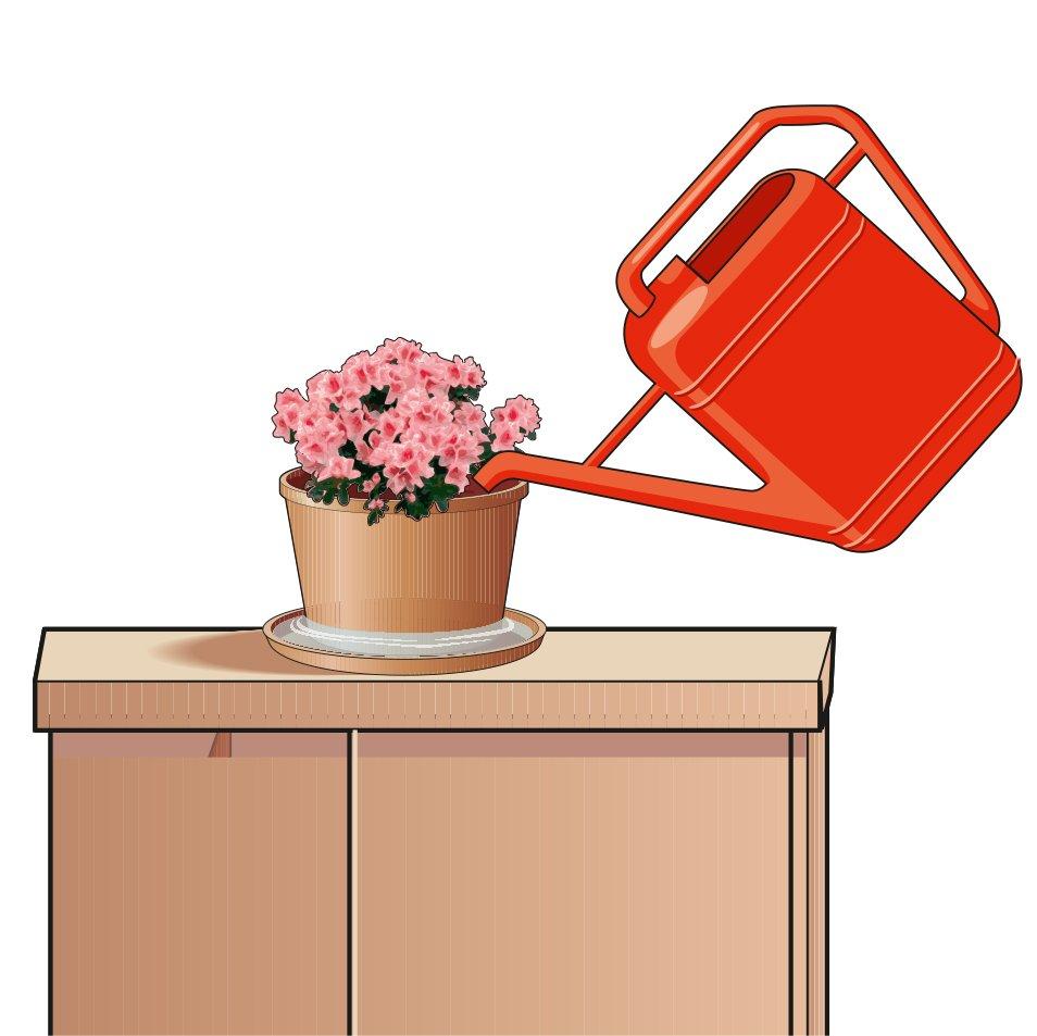 Azalee in casa fiorite a lungo cose di casa - Aria secca in casa ...