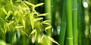 Il bambù per creare una barriera verde