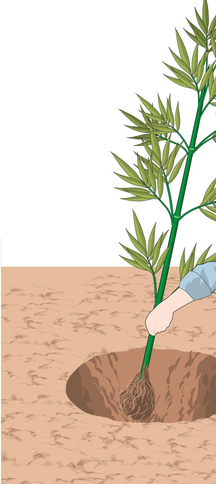 Vendita Piante Bambu Milano.Il Bambu Per Creare Una Barriera Verde Cose Di Casa