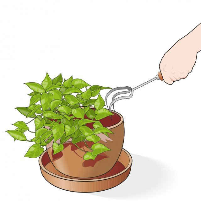 3. Bisogna fare attenzione a ossigenare di tanto in tanto anche la terra del vaso con un sarchietto per allontanare eventuali insetti dal vaso. Un passo fondamentale è quindi quello di controllare che le piante non abbiano parassiti.