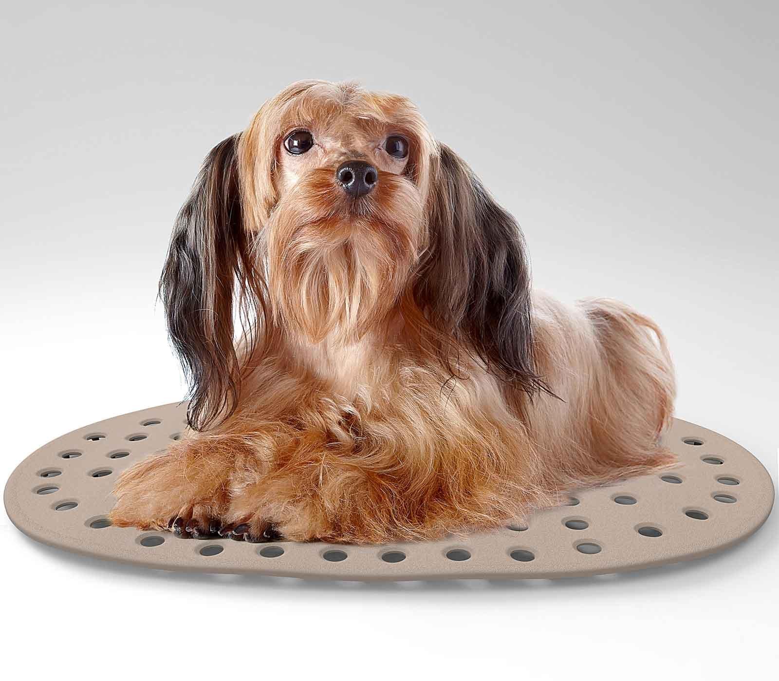 I regali per gli animali di casa cose di casa for Cose in regalo usato