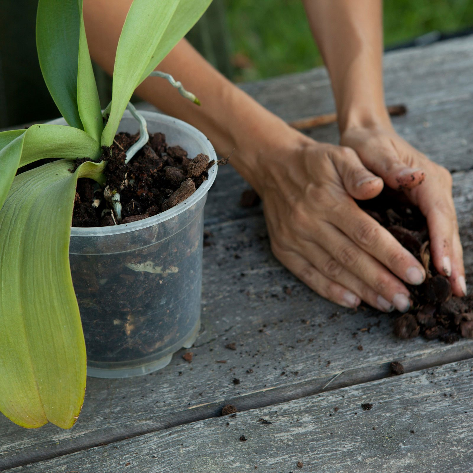 Rinvasare le orchidee cose di casa - Vaso in gres per orchidee ...