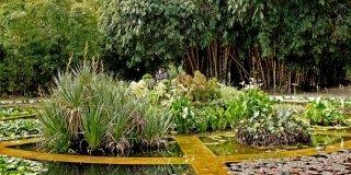Visitare l'orto botanico di Palermo