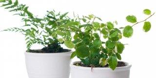 piante di casa