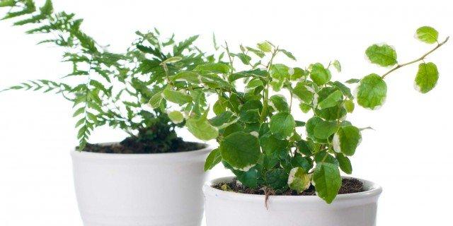 Cure Invernali Piante Da Interni Cose Di Casa