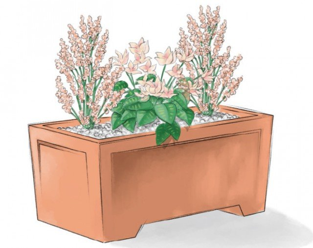 Per rendere più festoso l'aspetto delle nostre piantine fiorite sul balcone possiamo nascondere la terra ricoprendola con sassolini bianchi o corteccini. Una leggera spolverata con brillantini d'oro o argento ne renderà l'aspetto molto natalizio.